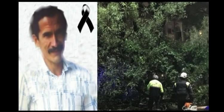 Anciano murió al caer de un árbol