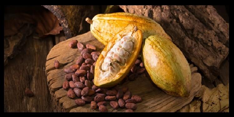 Cacao del Huila recibió certificación orgánica