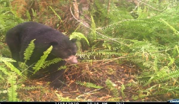 Identifican osos de antojos en zona rural de Neiva