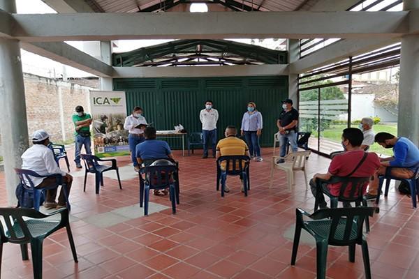 Certificados por el ICA, productores de plátano y aguacate Hass del Huila
