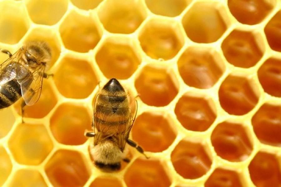 En el Huila se fortalecen en producción de miel