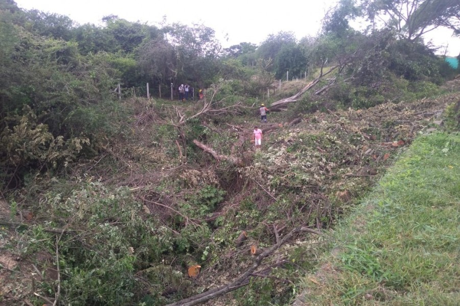 Denuncia arboricidio en la vía Aipe