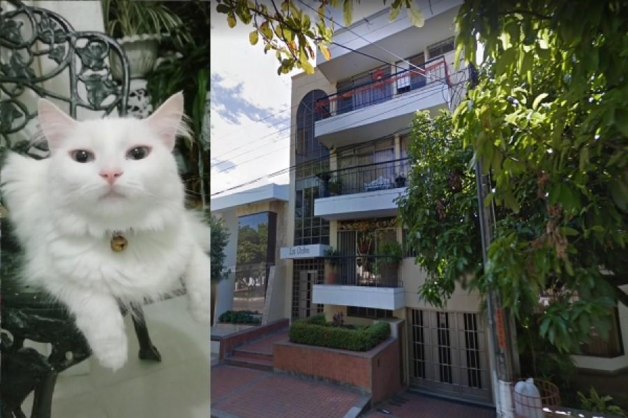 Delincuentes se llevaron hasta el gato de una casa en Neiva