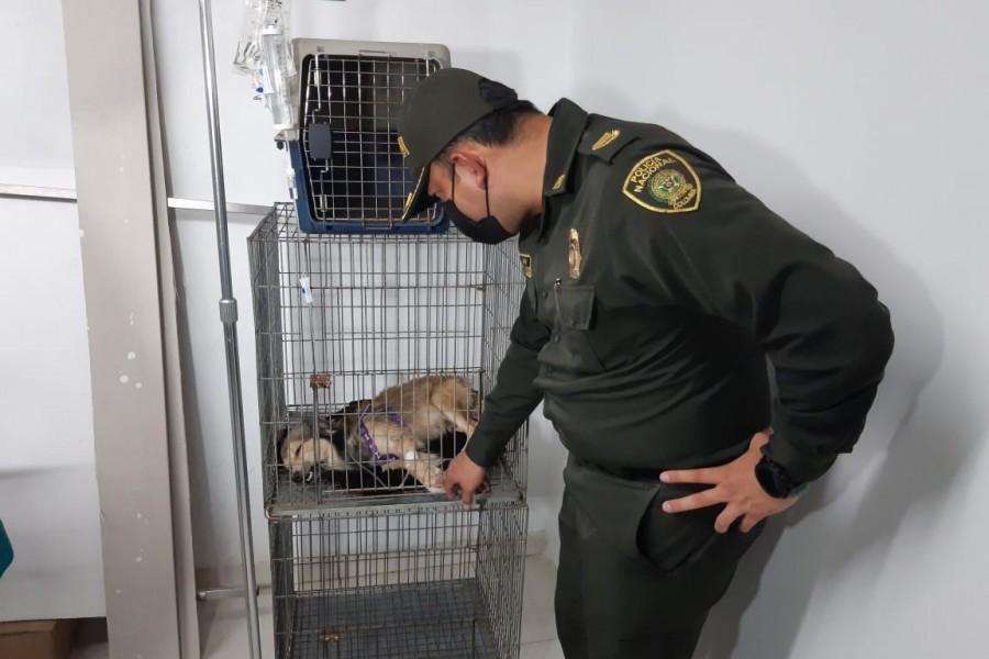 Perro agredido en Neiva ya recibe atención veterinaria
