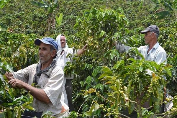 Comité de Cafeteros del Huila y Cámara de Comercio trabajarán por el beneficio de las zonas cafeteras