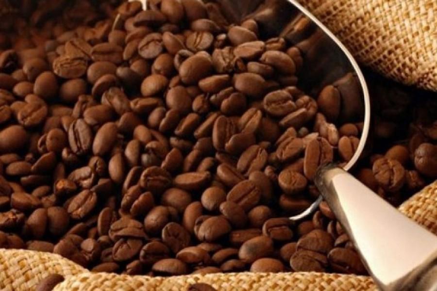 Importadores de Café aseguran tener retrasos para entregas a los tostadores en el resto del mundo
